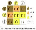 血型测试_血型遗传规律表