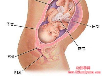 怀孕八个月男胎儿图